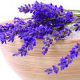 Lavenderbowl